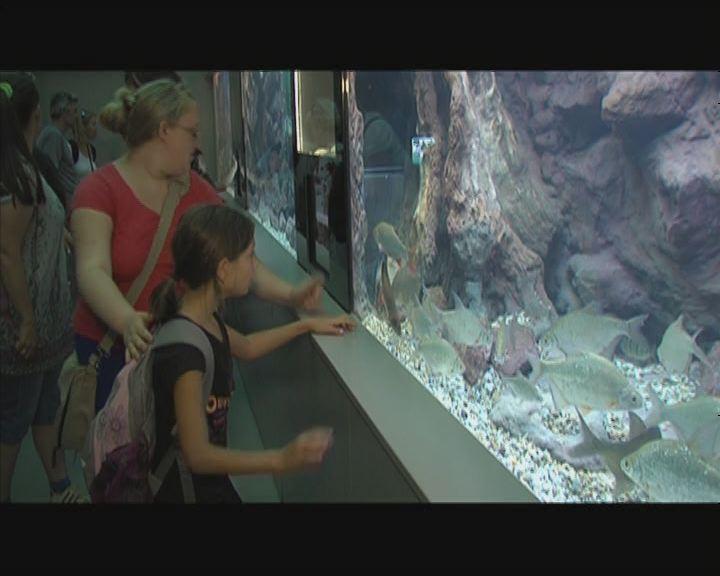 Balatoni akvárium nyílt