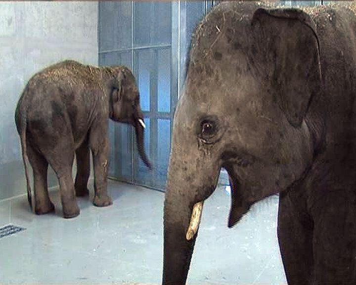 Elefántok Veszprémben