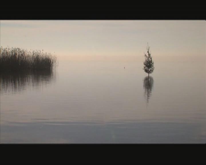 Karácsonyfa a tóban