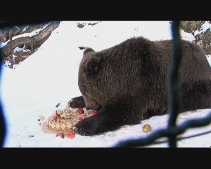 Előbújt a veszprémi medve