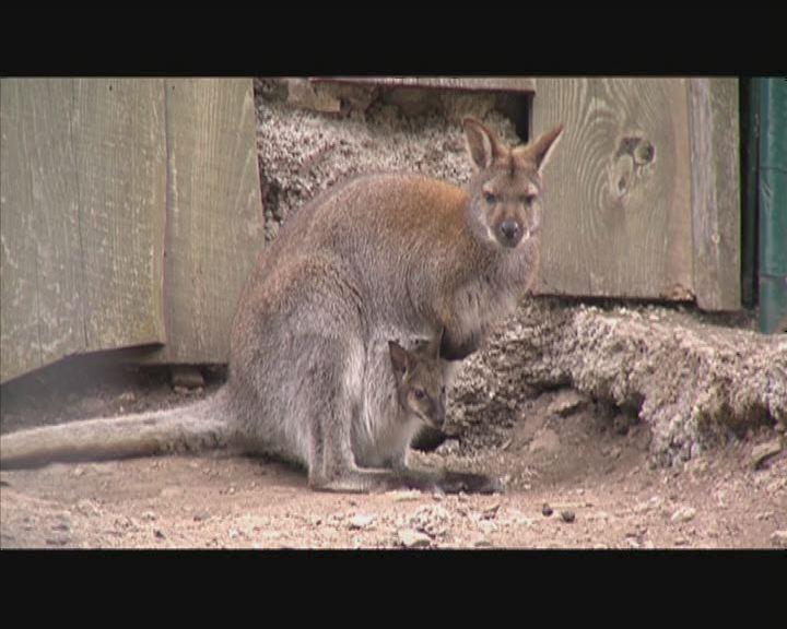 Új jövevények az állatkertben