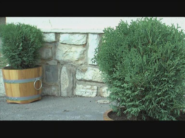 Növényeket ajándékozott a Zonta