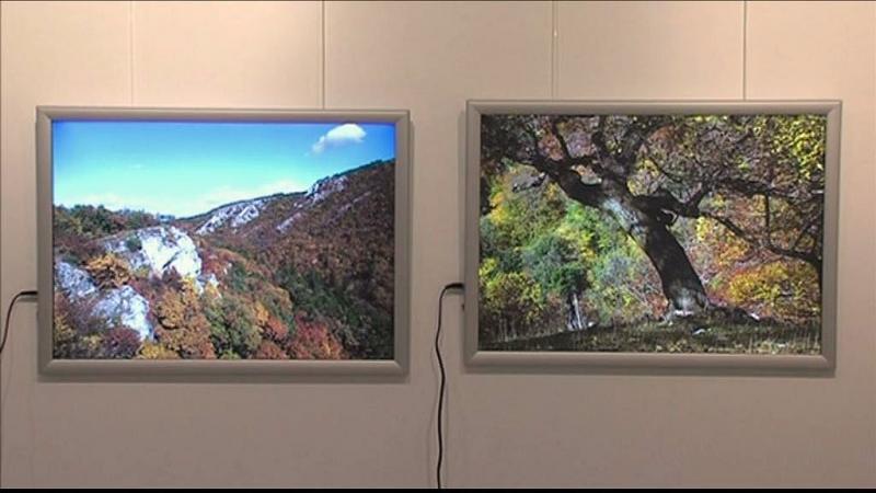 Kiállítás erdőről, fényről